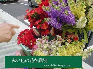 花の色を識別、色盲色弱の色覚検査 色覚テスト 色覚異常